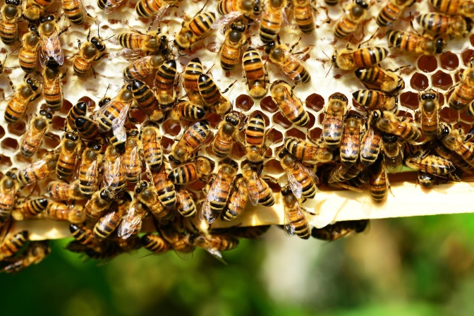 Queen Bee Gossip: Sweet as Honey or a Toxic Sting? (Series: Toxic People and Situations)